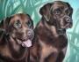 dogs-pair-2