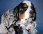 dogspair4