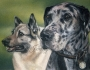 dogspair6