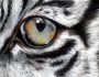 eye-of-tiger